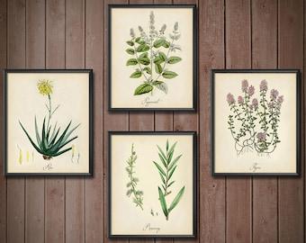 Wall Decor Set Kitchen Herbs - SET OF 4 - Kitchen Art Print Herbs Set - Wall Decor Kitchen Herbs Set - Wall Decor Set Herbs - 2411