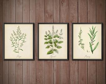 Kitchen Decor Set Herbs SET OF 3 - Kitchen Decor Wall Art Set - Kitchen Wall Art - Kitchen Wall Art Set Herbs - 2403