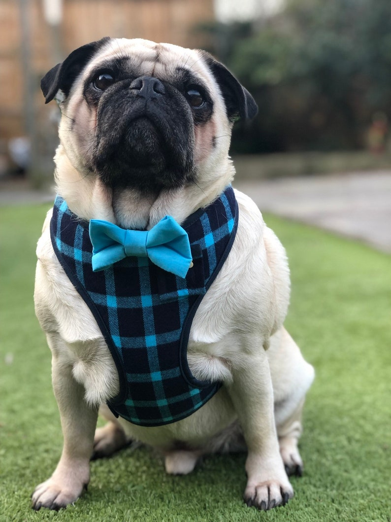Sir Barnaby navy and bright sky blue plaid harness with blue bow-tie S L /& Custom pocket and bone button \u2013 XS Hand-made M