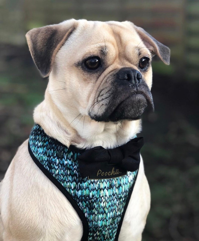 luxury blue /& green crushed velvet harness with our Poochu signature logo tag and option of black bow on back Hand-made The Raeni