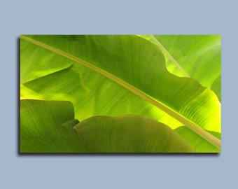 Nature Photography / Tropical Photography / Fine art photography