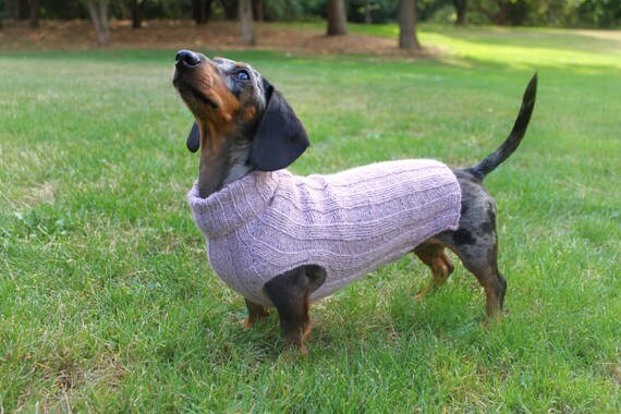 dachshund sweater for dog