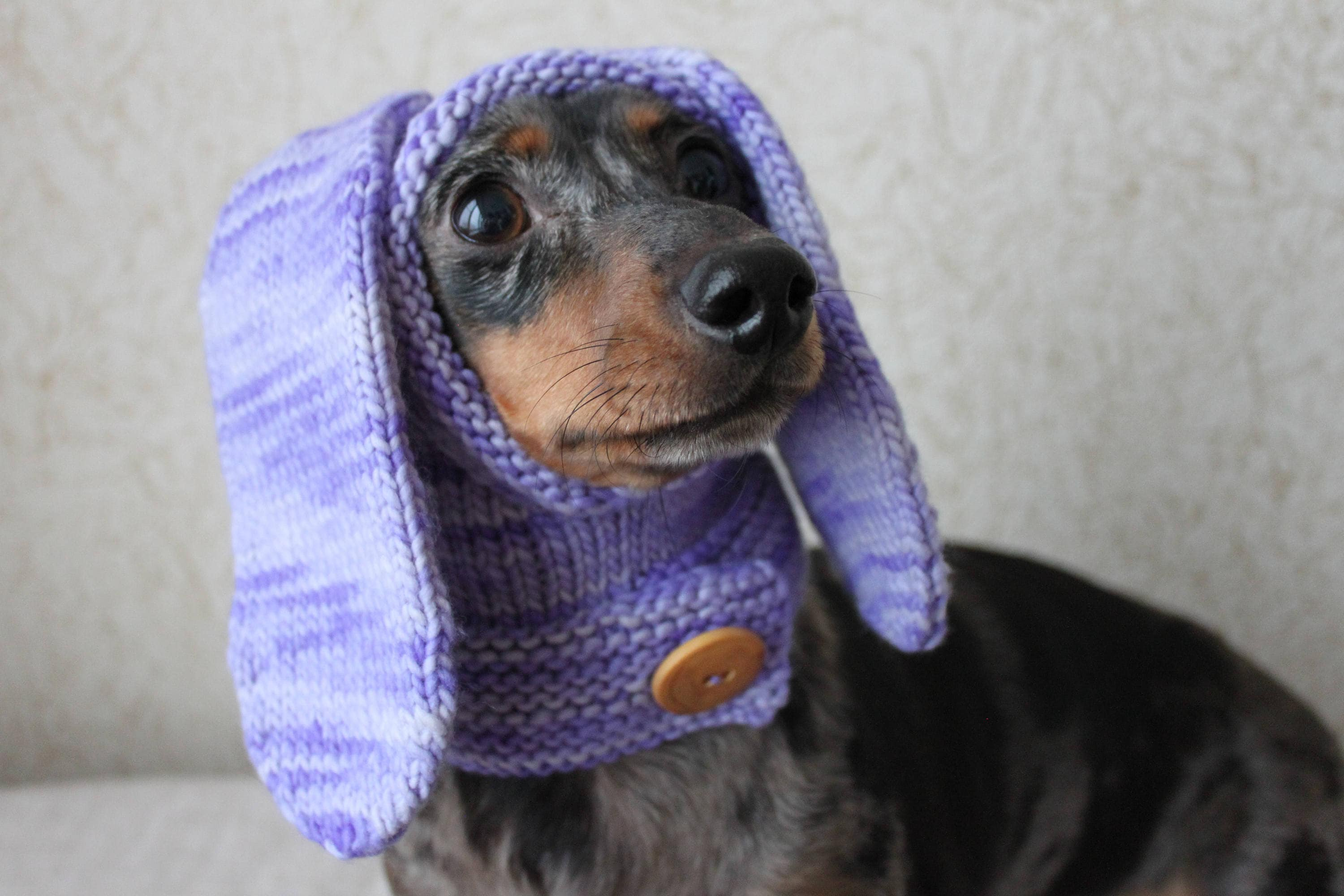 Simple clothes and patterns for a dachshund from a mens sweater