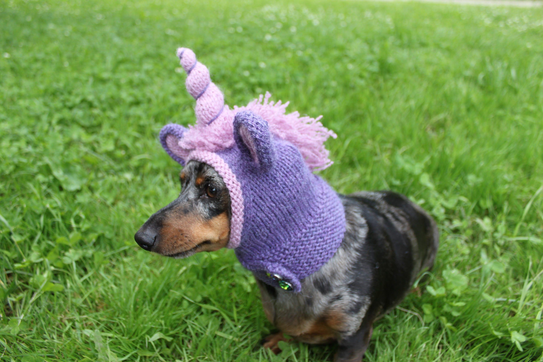 Knitting Pattern Dachshund Unicorn Hood Dog Hat Dogs Pet Etsy