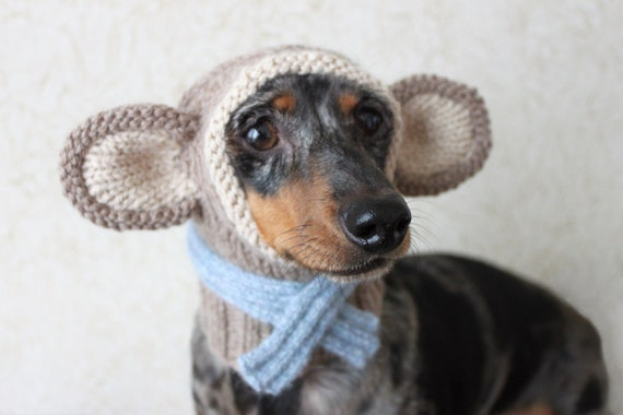 KNITTING PATTERN Small Dog Monkey Hood Dachshund Dog Hat Etsy Extraordinary Dog Hat Knitting Pattern