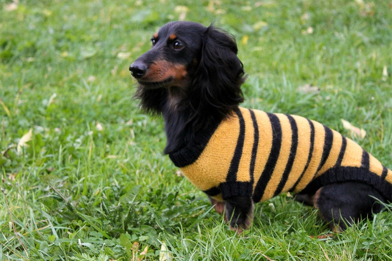 Bee Sweater Dog Lover Gift Dog Owner Gift Dog Clothes KNITTING PATTERN Dog Bee Sweater Dogs Pet Gift Dachshund Costume Dog Costume