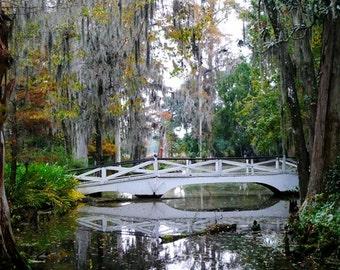 Bridge at Magnolia Plantation - 1