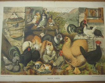 Boys Pets, Hand-Colored Print, Rabbits, Chickens, Pigeons, Hamsters,1880s