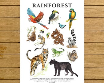 Rainforest Poster, Rainforest Animals, Watercolor Art, Nursery Decor, Jungle Animals, Tropical Home Decor, Montessori Kids, Biology Wall Art