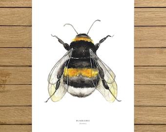 "Bumblebee, Bees, Bee Print, Bee collection, Home decor, Giclee Print, Kids room, Nursery decor, Art, A4, A3, A3+, 8.5""x11"", 13""x19"" size"