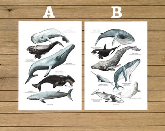 Whales Posters, Whale Types, Two Pack Prints, Watercolour Illustration, Ocean Prints, Wall Art Decor, Kids Room, Home Decor, Montessori Kids