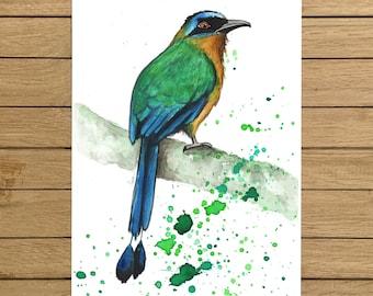 "Amazonian Motmot, Tropical Bird, Birds, Giclée Print, Watercolor Illustration, Home Decor, Nursery Decor, A5, 8.5""x11"", A4, A3, 13""x19"""