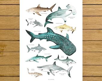 Sharks Poster, Sharks Print, Shark Species, Shark Nursery Decor, Kids Room, Wall Art Decor, Beach Home Decor, Ocean Lovers, Shark Wall Art