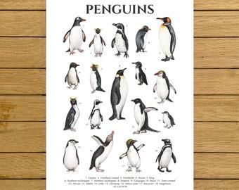 Penguins Poster, Penguin Species, Antarctica Animals Art, Watercolor Penguins, Nursery Decor, Nordic Home Decor, Kids Room Wall Art