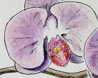orchids, original watercolor and ink floral painting