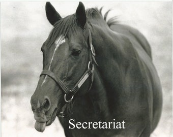 "SECRETARIATS - Sticking Out His Tongue - 10"" x 8"""