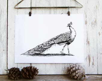 Peacock print, Black and white printable, Peacock decor, Nature art print, Hipster room decor, Cabin decor, Hostess gift