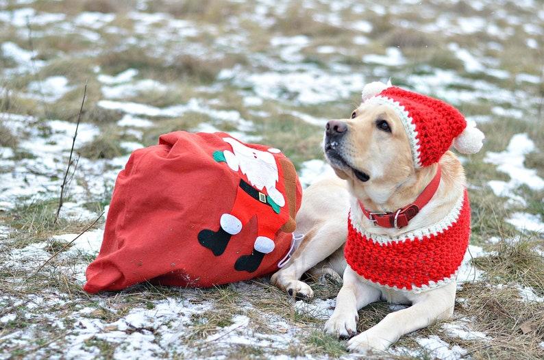 image 0 & Dog Christmas gifts Dog lover gift for Dog christmas scarf hat | Etsy