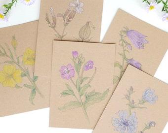 Set / 5 postcards meadow flowers in July
