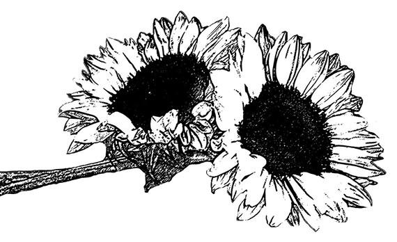 Girasol Sello DIGITAL Blanco Y Negro Digi 01 Clip Art Para