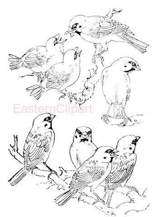 Artículos similares a Dibujo gorriones chinos #13-PNG descargar ...