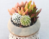 Live Potted Succulents in Stylish Ceramic Container, Succulent Centerpiece, Succulent Arrangement, Teacher Gift, Hostess Gift