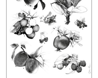 """Illustration """"Fruit Collection"""" Poster format A4"""