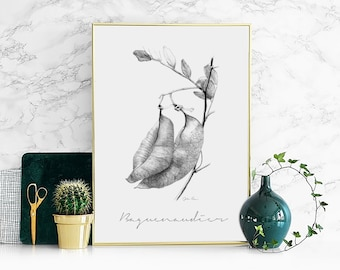 "Illustration ""Baguenaudier"" Poster format A4"