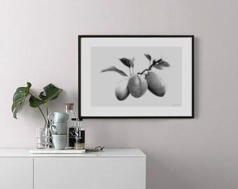 """Illustration """"Prune"""" Poster format A4"""