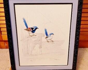 Blue wrens - 2 x matching original drawings by Barry RJ Ingham