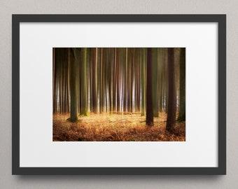 The Trees Glow - Fine Art Nature Print