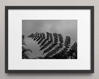 My last chance to see the sky - Fine Art Nature Print