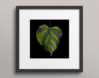 Green and Grey - Fine Art Nature Print