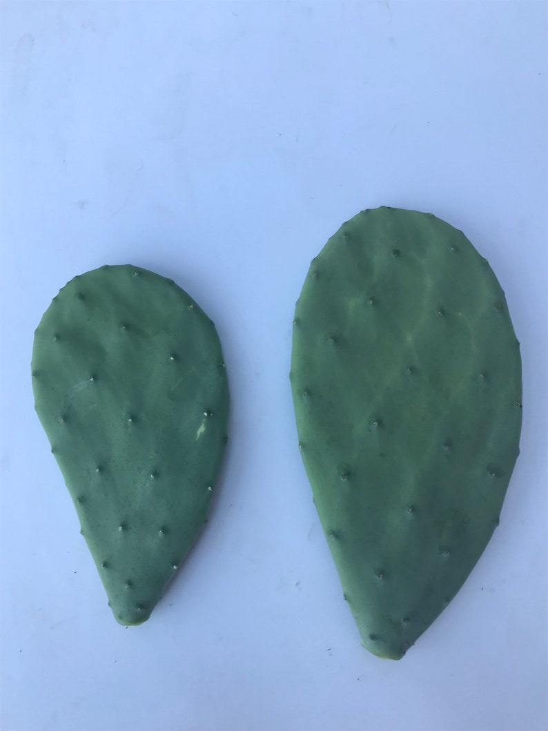 Indoor House Plants Edible Cactus Pads Spineless Prickly Pear Cactus Pads Opuntia ellisiana