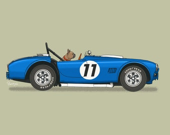 French Bulldog burning rubber in his AC Shelby Cobra art print! Dogs Driving Things Series 5