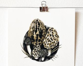 MORCHELLA - art print, nature print, mushroom illustration, mushroom art, wall art, ink painting, morel love, mycology lover gift, gift idea
