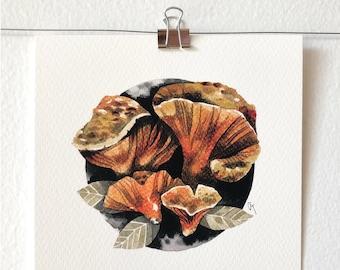 HYPOMYCES LACTIFLUORUM - art print, nature print, mushroom illustration, mushroom art, wall, ink painting, mycology lover gift, gift idea