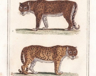 Antiques Decorative Arts Jaguar And Panthers Antique Handcolored Animal Print Custom Framed