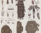 1797 Rare Antique Life Stages of Honey Bee Original Print from Encyclopaedia Britannica