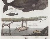 1797 Rare Antique Humpback Whale Whaling Flying Bridge Construction Original Print from Encyclopaedia Britannica