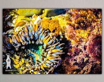 Sea Anemone Underwater Wall Art, Beach Decor, Ocean Art Prints, Colorful Photos, Aquatic Life, Modern Wall Art