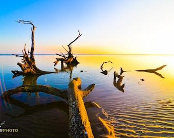 Florida Seascape, Coastal Decor, Driftwood Beach Decor, Seascape Photography, Seascape Sunrise, Lowcountry, Jacksonville Beach, Wall Art