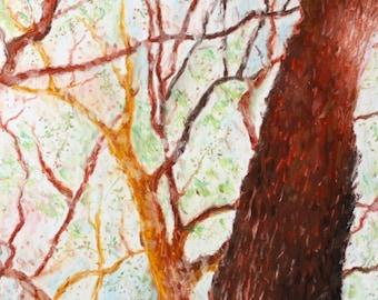 Original Oil Pastel Trees, Tree Drawing, Pastel Trees, Nature Drawing, Forest Drawing, Small Oil Pastel Art