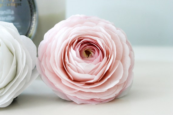 Ranunculus Blush Pink Realistic Coffee Filter Crepe Paper Etsy