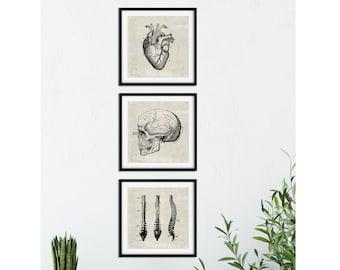 SET of 3: Doctor's Office Art, Anatomical Heart Print, Vintage Medical Illustrations, Skull Poster, Spine Illustration, Anatomical Brain