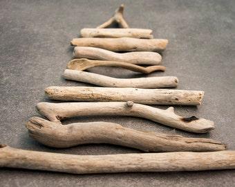 Driftwood sea wood