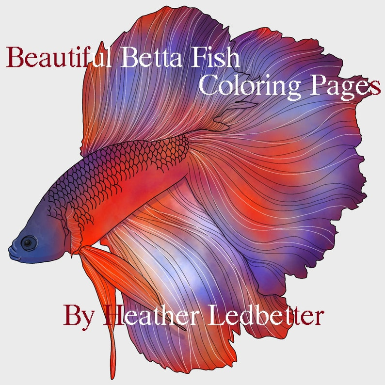 Beautiful Betta Fish Coloring Pages 6 Images Etsy