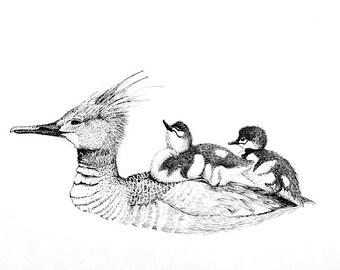 Merganser and Chicks