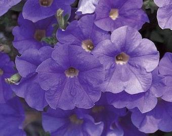 RAMBLIN SKY BLUE Petunia Seeds - Trailing Petunia, Large Flowers, Fresh & High Quality Seed (10 seeds)