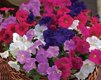 PICOBELLA MIX MINI Petunia Seeds - Tiny Blooms, Easy Germination, Fresh Quality (30 - 35 seeds)